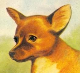 Dingo pup swapcard